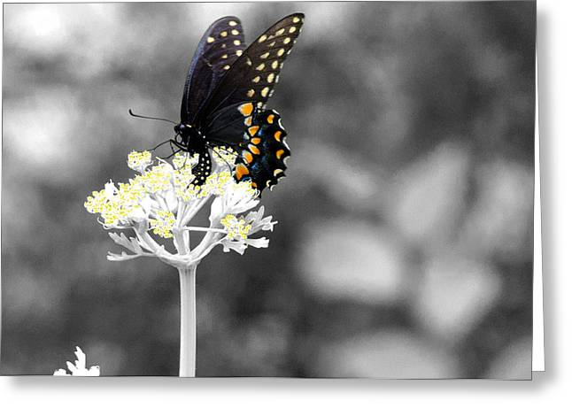 Isolated Swallowtail Butterfly Greeting Card by Lorri Crossno