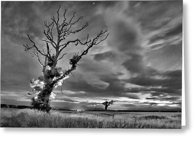 Isolated Tree Greeting Card by Buster Brown
