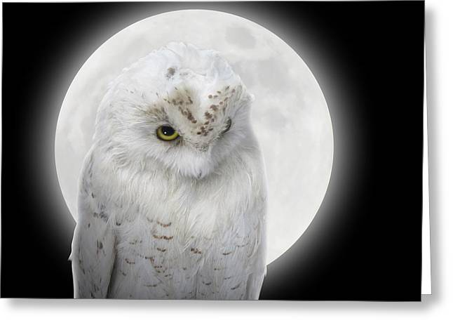 Isolated White Owl In Night With Moon Greeting Card by Angela Waye