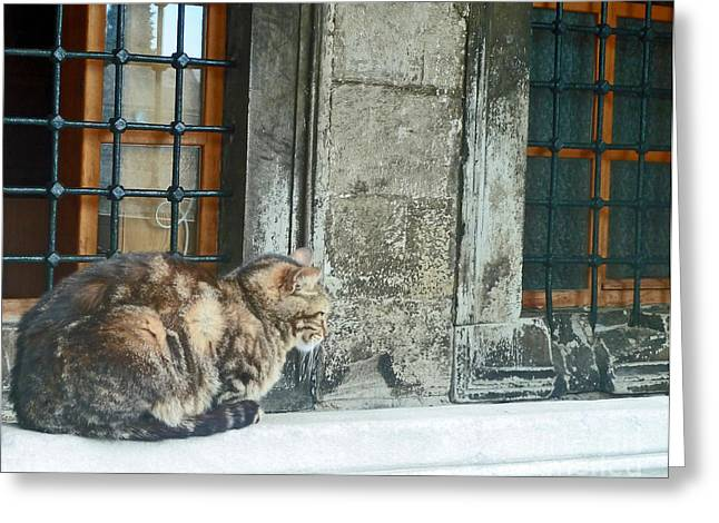 Istanbul Cat Greeting Card by Cheryl Del Toro