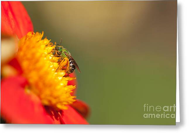 It Is All About The Buzz Greeting Card by Beve Brown-Clark Photography