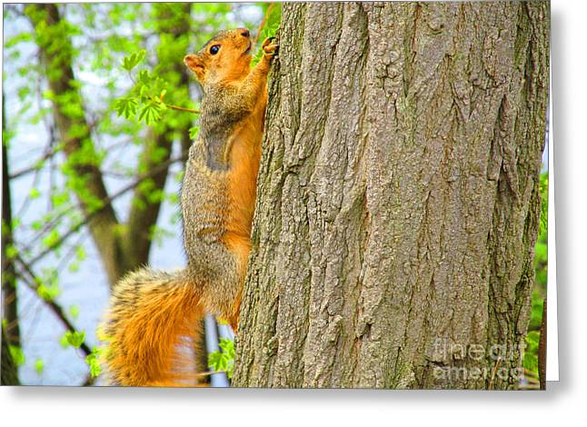 It Is Hard Work Getting To The Top Greeting Card by Tina M Wenger
