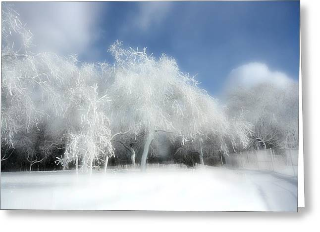 Surreal Snow Covered Trees Greeting Card