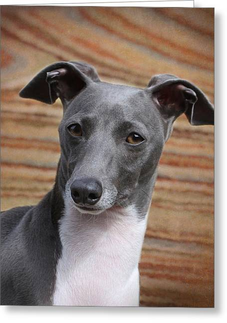 Italian Greyhound Greeting Card by Angie Vogel