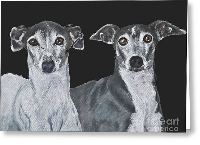 Italian Greyhounds Portrait Over Black Greeting Card