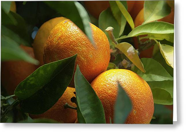 Greeting Card featuring the photograph Italian Oranges by Michael Flood
