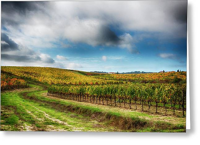 Italy, Montepulciano, Autumn Vineyard Greeting Card by Terry Eggers