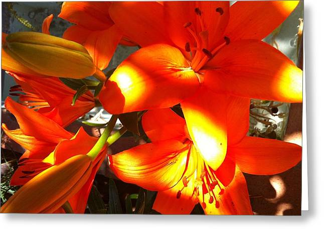 It's A Beautiful Day Lily Greeting Card by Stephanie Aarons