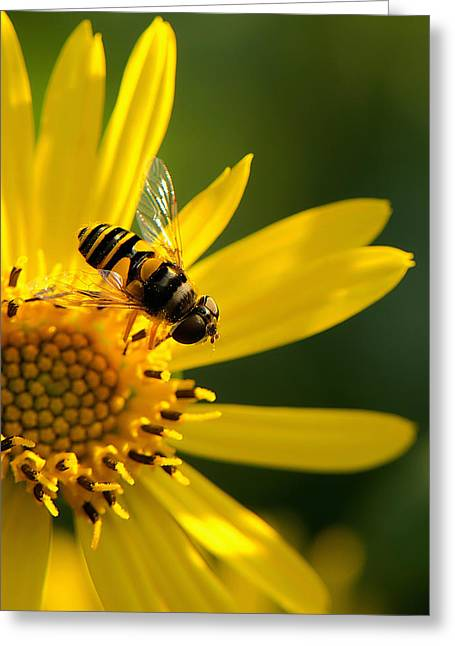 Its A Bees Life IIi Greeting Card by Kathi Isserman