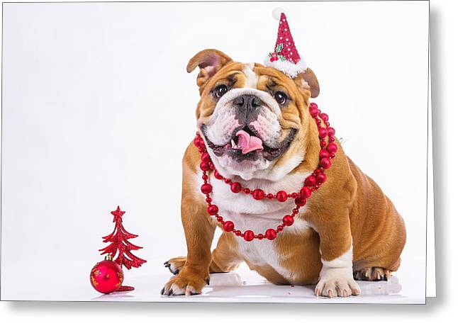 It's A Dogs Christmas Greeting Card by Doc Braham