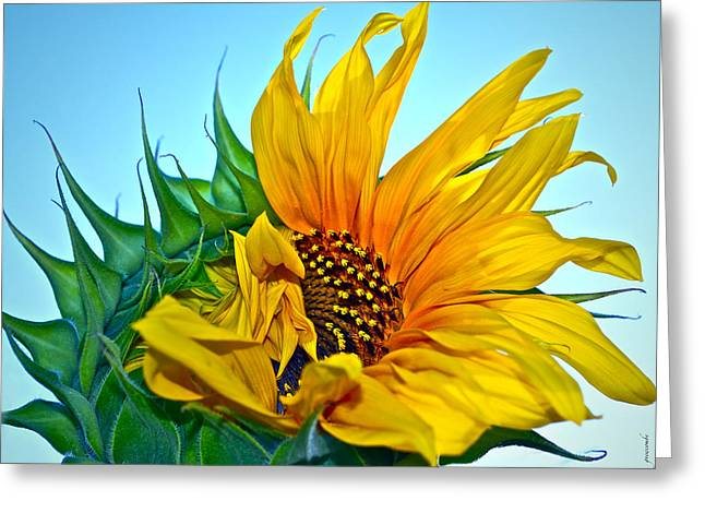 Its A New Dawn Greeting Card by Gwyn Newcombe