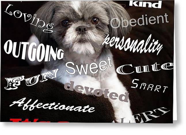 It's A Shih Tzu Greeting Card by William Schmid