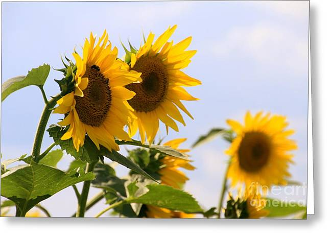 It's A Sunflowery Day Greeting Card by Dorothy Drobney