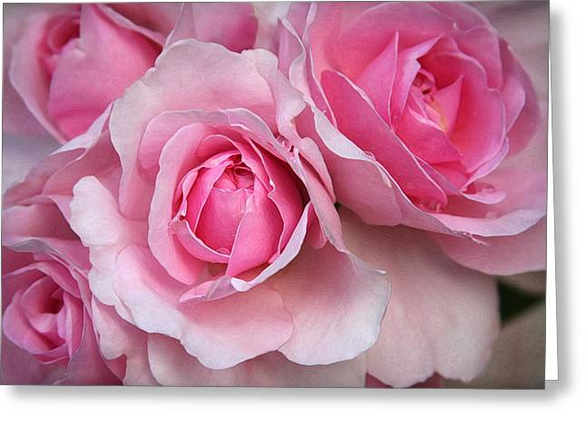 It's Bloomin' Pink Greeting Card by CarolLMiller Photography