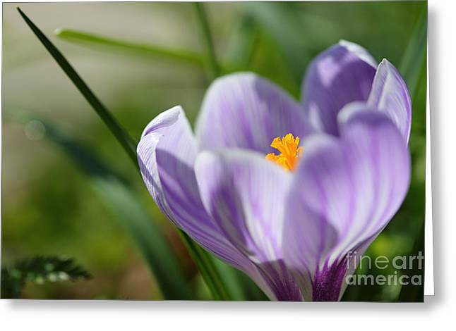 It's Finally Spring Greeting Card by LHJB Photography