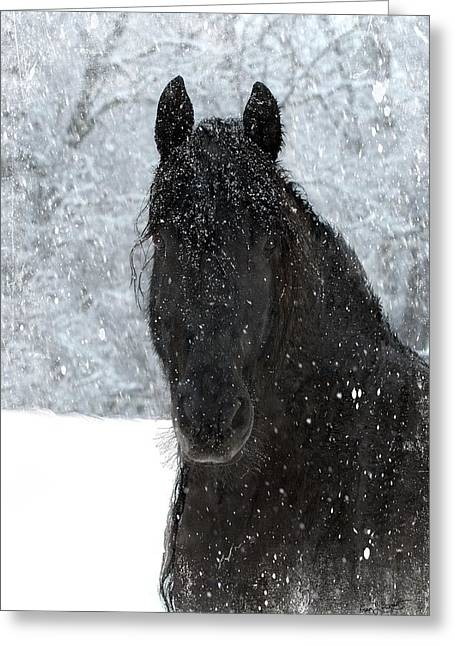 It's Friesian Out Here Greeting Card by Fran J Scott