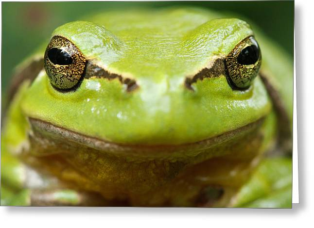 It's Not Easy Being Green _ Tree Frog Portrait Greeting Card