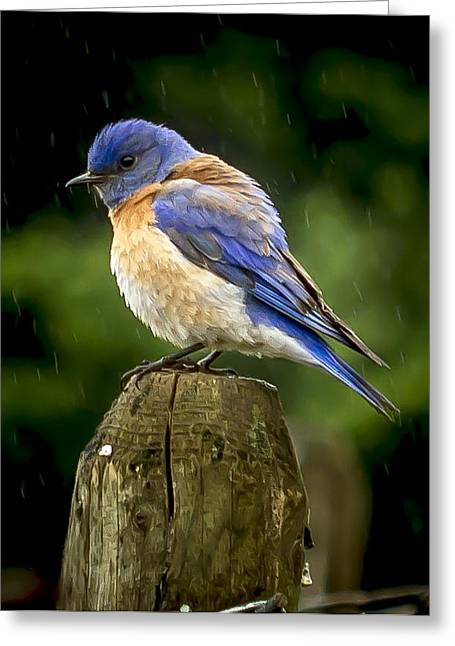 Its Wet Out Here Greeting Card by Jean Noren