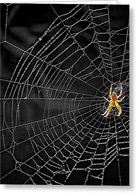 Itsy Bitsy Spider My Ass 3 Greeting Card
