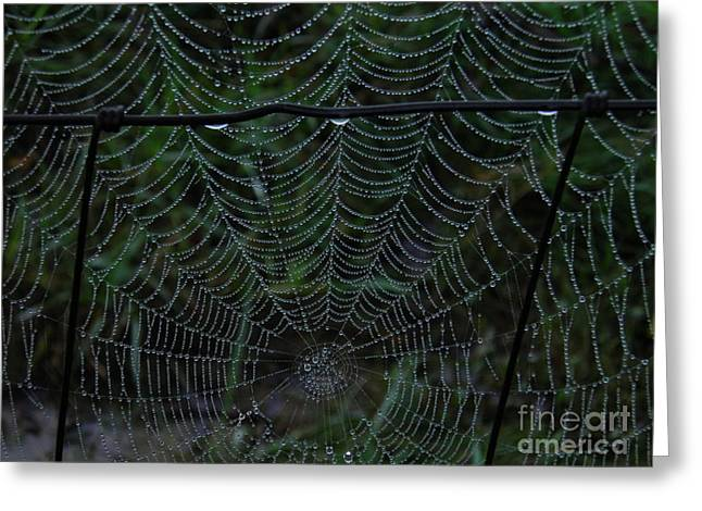 Itsy Bitsy's Spider Web Greeting Card by Amy Stuart Langlo