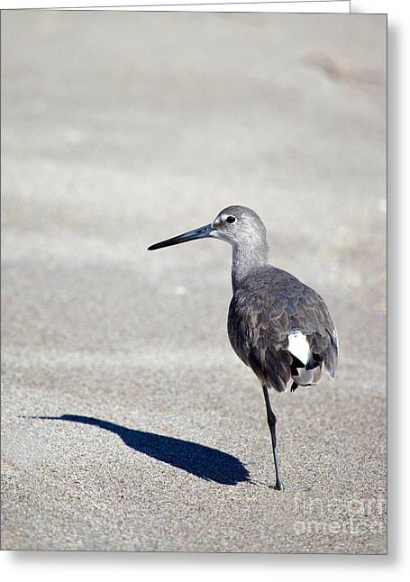 I've Got An Eye On You Greeting Card by Michelle Wiarda
