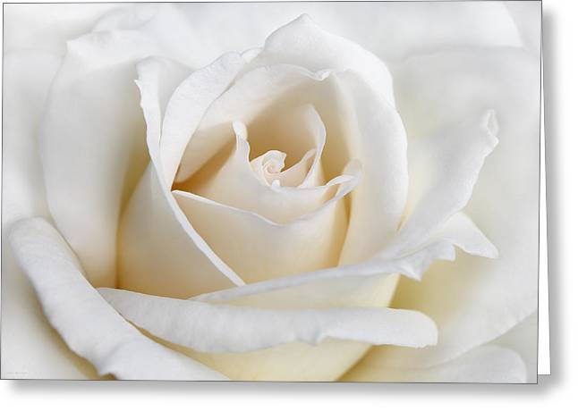 Ivory Rose Flower Greeting Card by Jennie Marie Schell