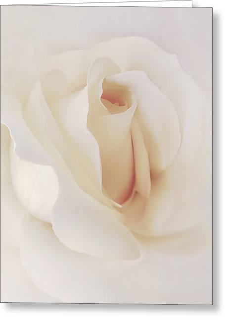 Ivory Rose Splendor Flower Greeting Card by Jennie Marie Schell