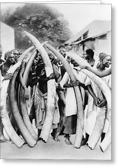 Ivory Trade In Africa Greeting Card by Library Of Congress