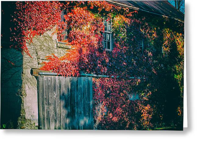 Ivy Covered Barn Greeting Card