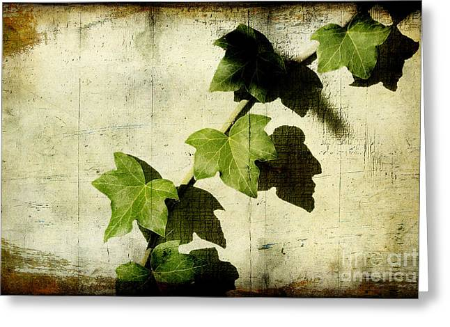 Ivy Greeting Card by Ellen Cotton