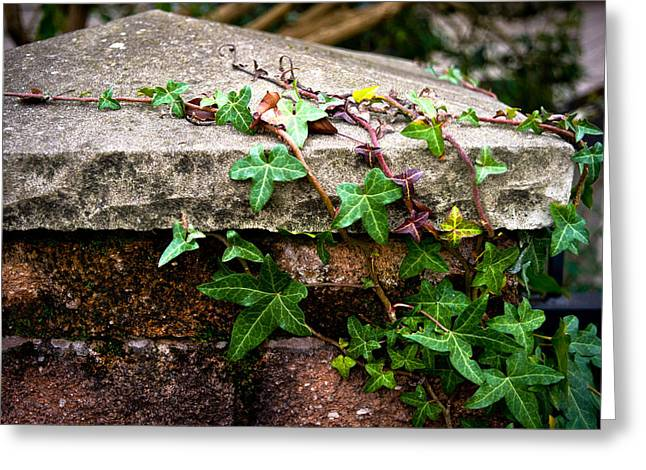 Ivy On Stone Greeting Card