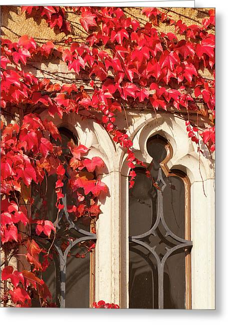 Ivy On Wall Germany Greeting Card by Michael Defreitas