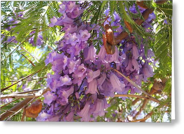 Jacaranda Blossoms 2 Greeting Card by Nancy Kane Chapman