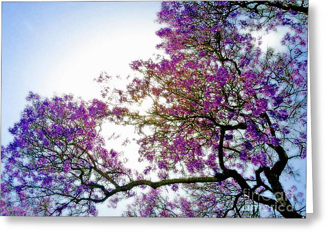 Jacaranda Glory Greeting Card
