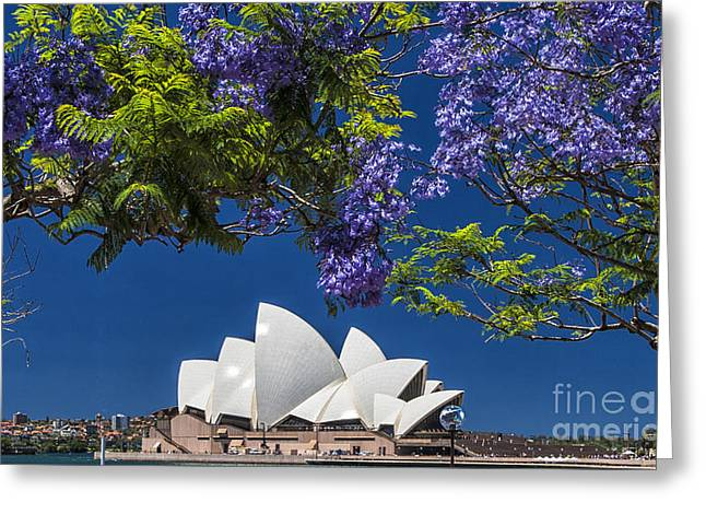 Jacaranda Spring Greeting Card