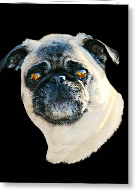 Jack Greeting Card by Diana Angstadt