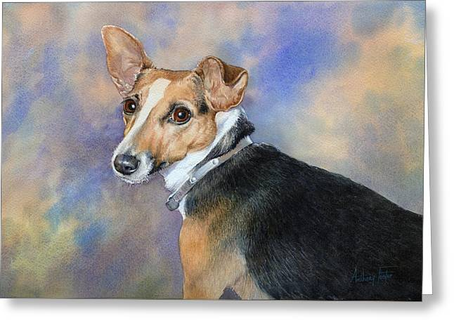 Jack Russell Greeting Card by Anthony Forster