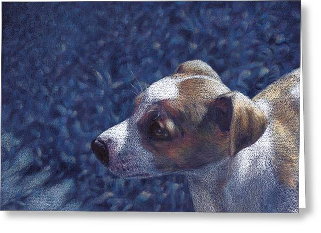 Jack Russell Terrier On Blue Greeting Card