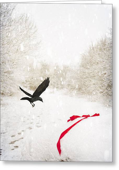 Jackdaw In Snow Greeting Card