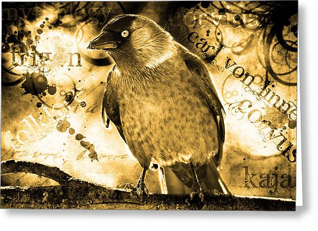Jackdaw Greeting Card by Tommytechno Sweden