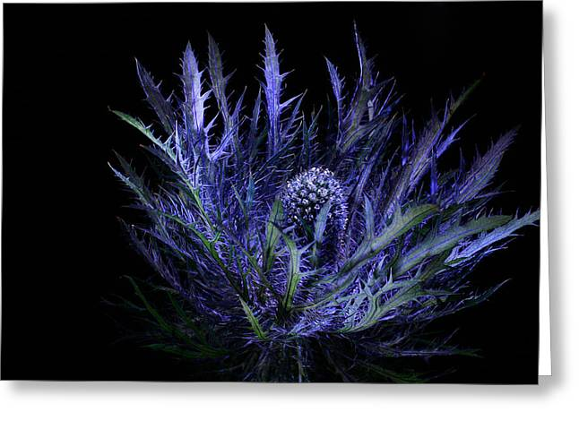 Jackpot Blue Thistle Greeting Card