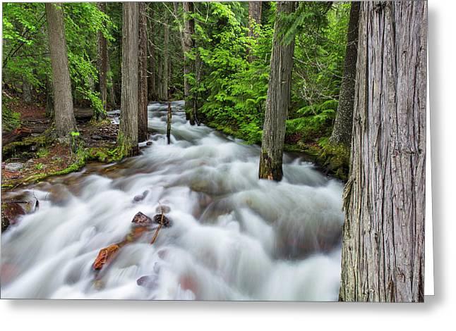 Jackson Creek In Glacier National Park Greeting Card