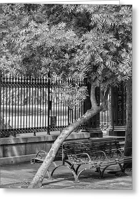 Jackson Square Bench And Tree Greeting Card