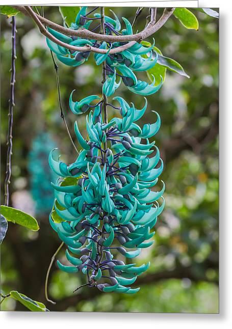 Jade Vine Flower Greeting Card