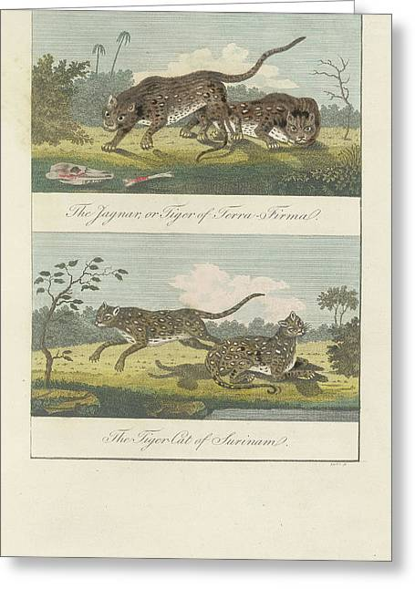 Jaguar And Tiger Cat Greeting Card by British Library