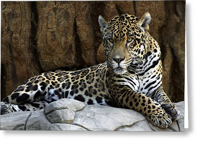 Jaguar Portrait  Greeting Card