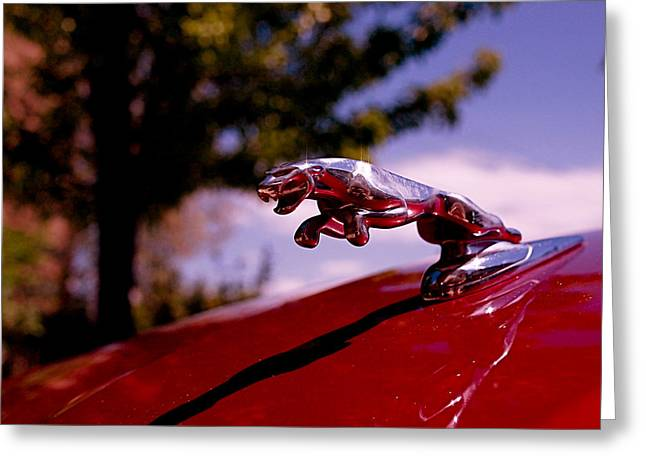 Jaguar Greeting Card by Rona Black