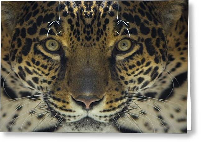 Greeting Card featuring the photograph Jaguar  by Sonya Lang