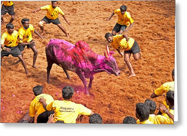 Greeting Card featuring the photograph Jallikattu Bull Fighting by Dennis Cox WorldViews