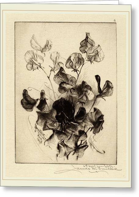 James David Smillie, Sweet Peas, American Greeting Card by Litz Collection